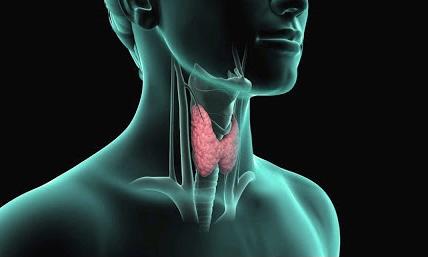 Кисты щитовидной железы. Как быть, и что с ними делать?